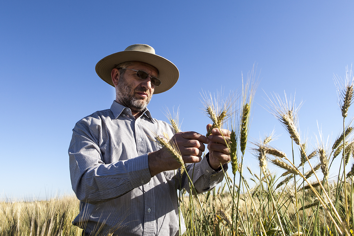 CIMMYT wheat physiologist Matthew Reynolds has been appointed a member of the Mexican Academy of Science.