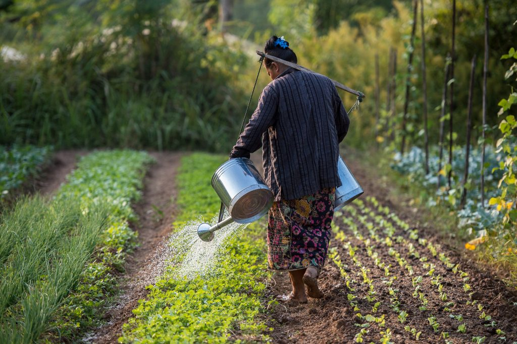 A farmer watering plants at an organic farm in Boung Phao Village, Laos. (Photo: Asian Development Bank)
