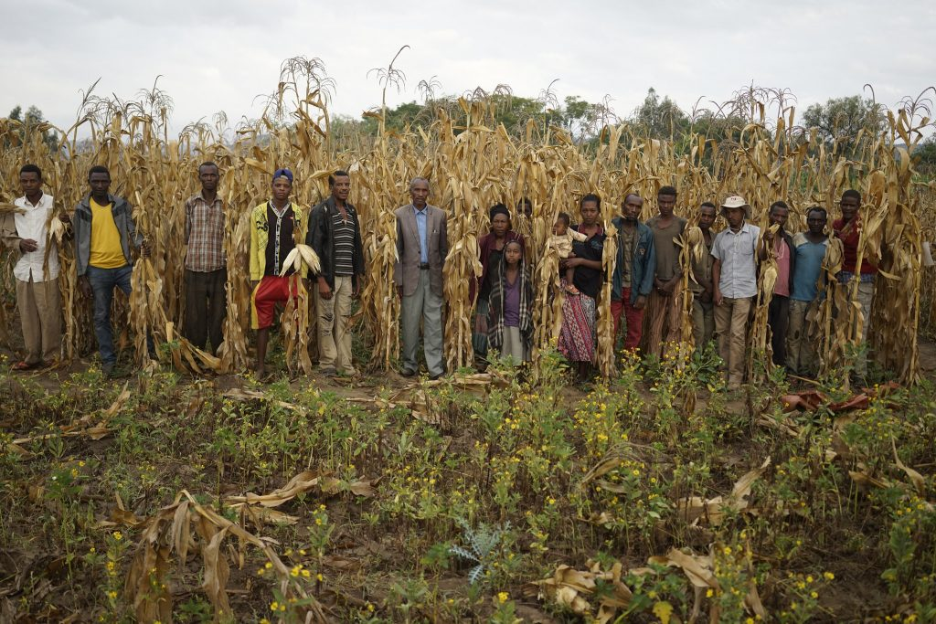 A farmers group stands for a photograph at a demonstration plot of drought-tolerant (DT) maize in the village of Lobu Koromo, in Ethiopia's Hawassa Zuria district. (Photo: P. Lowe/CIMMYT)